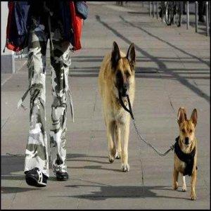 犬が犬を散歩させる