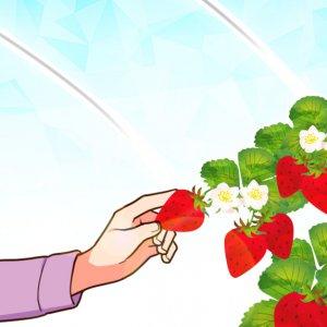 イチゴ狩りを楽しむ♪